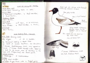 Birding Note Book 1998 (Med Gull). Bill Morton